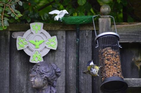 Birds in the garden Alfreton 2017 Gerry Molumby   (13).JPG